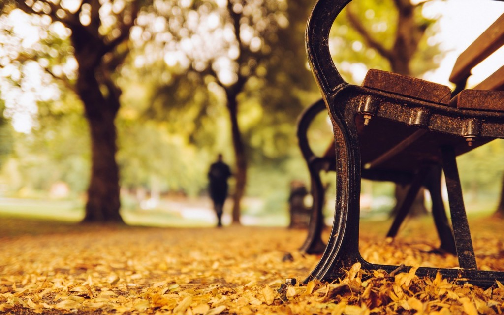 6981157-bench-trees-park-leaves-yellow-autumn-nature